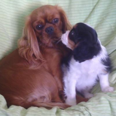 photos de nos chiens